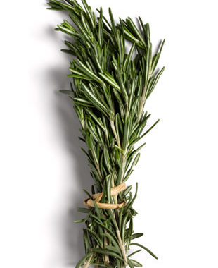Rosemary1.jpg