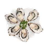 Planet Seafood Tasmanian Oysters St Helens Nicholas Duell © 2020 Dsc 4671