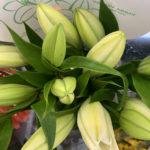 Oriental Lillies – White