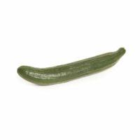 cucumber seedlingcommerce © 2018 7990.jpg
