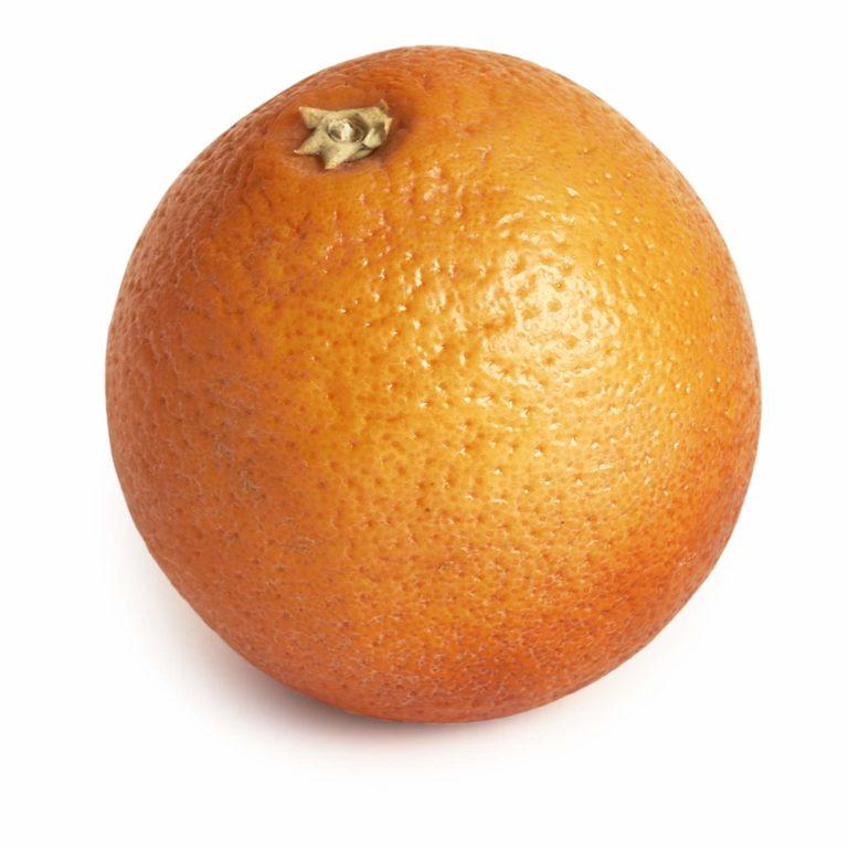Blood Orange Seedlingcommerce © 2018dsc 8302.jpg
