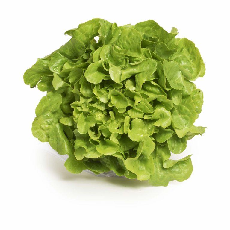 Green Oak Seedlingcommerce © 2018 7964.jpg