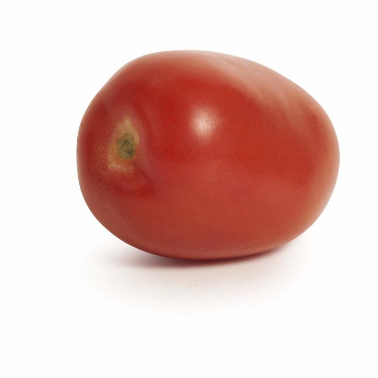 Tomato Roma Seedlingcommerce © 21018 8015.jpg